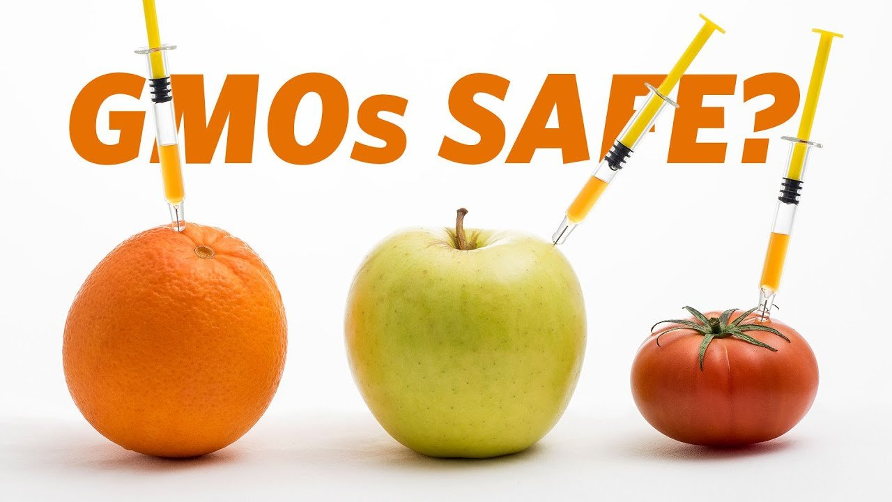 GMOs what are they and are they reliable
